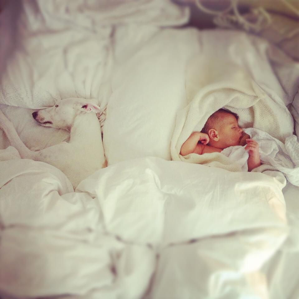 LAESSIG-Ratgeber-Babys-und-Haustiere-Tipps-fuer-ein-sicheres-Zusammenleben7VMvyT15nVKW3