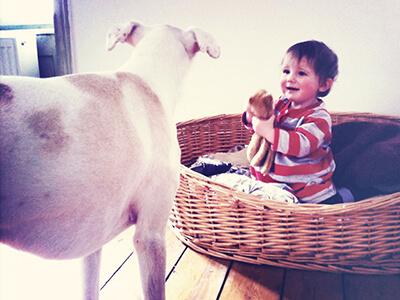 LAESSIG-Ratgeber-Babys-und-Haustiere-Tipps-fuer-ein-sicheres-Zusammenleben-Korb