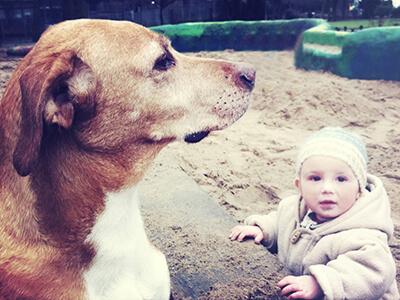 LAESSIG-Ratgeber-Babys-und-Haustiere-Tipps-fuer-ein-sicheres-Zusammenleben-Korb-Sandkasten